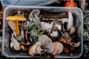 Composting 101 Business Rubicon Food Waste